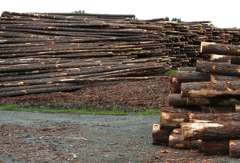 מחסן עצים חולון